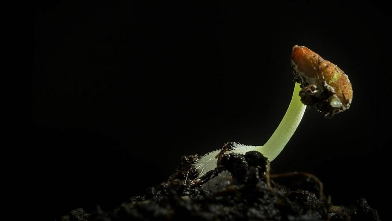《宏延时》花样摄影纪录小豆芽生长过程