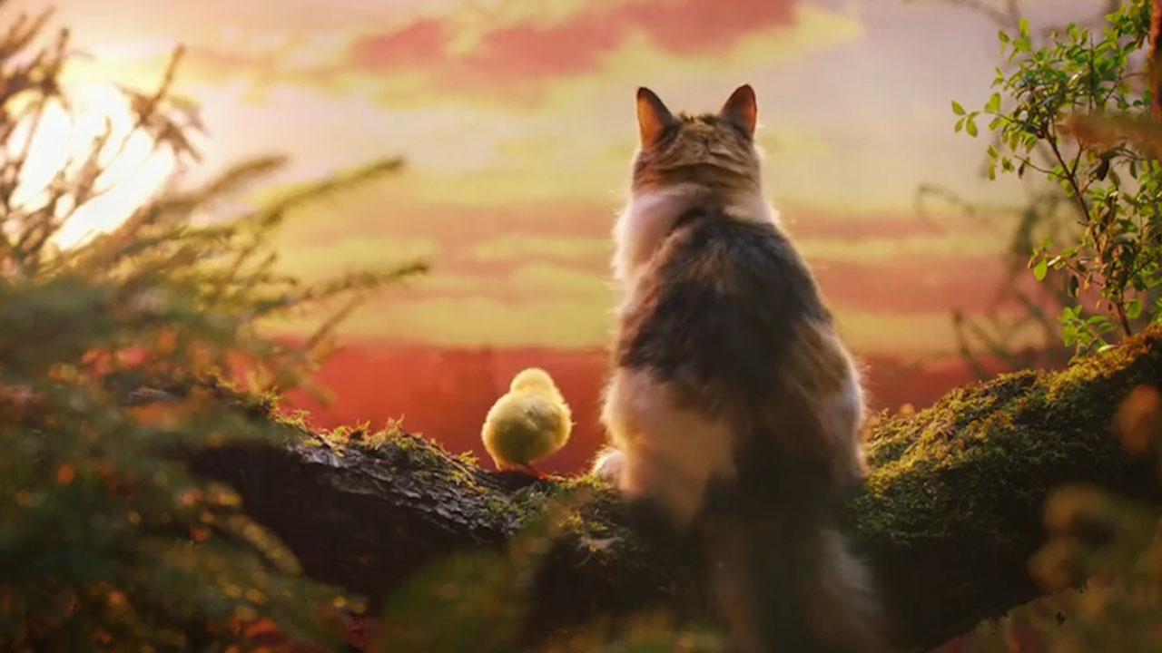 创意猫粮广告-英国创意广告-产品宣传片